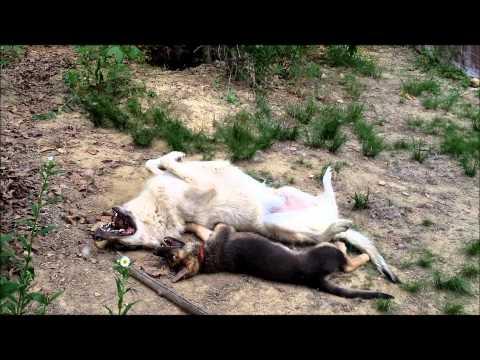 Susi ja koiranpentu – Parhaat kaverit