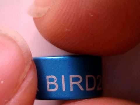 Bird Leg Ring Identification / Leg Bands / Pigeon Foot Ring, Fiber Marking / Engraving Result