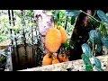 Best Sights  Sounds of Bangladeshi Village  Beautiful Bengali Holiday Travel Food Road Vlog waptubes