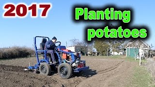 I plant the potatoes using a garden tractor second times. Planting potatoes using my minitractor first times: https://www.youtube.com/watch?v=OnQXoD3h58oHand tools for planting: https://www.youtube.com/watch?v=Sp5R28bklugPuller made with own hands: https://www.youtube.com/watch?v=Dj25ZrmDmPEHomemade lathe for wood: https://www.youtube.com/watch?v=Ck_EL33PMg0Homemade wheel hand hoe. Garden wheel hoe: https://www.youtube.com/watch?v=H2rn-TsGvkkHilling potatoes using a garden tractor: https://www.youtube.com/watch?v=gIqg-h6QAgoHomemade garden tractor digging potatoes: https://www.youtube.com/watch?v=wDgu18zQaQwMy homemade garden tractor: https://www.youtube.com/watch?v=Mt5xFKd0vAcThe process of assembling my garden tractor: https://www.youtube.com/watch?v=3JkUFFnmglkLiberal DIY: https://www.youtube.com/channel/UCfy35XU-M9w-jXmNUsO--fA