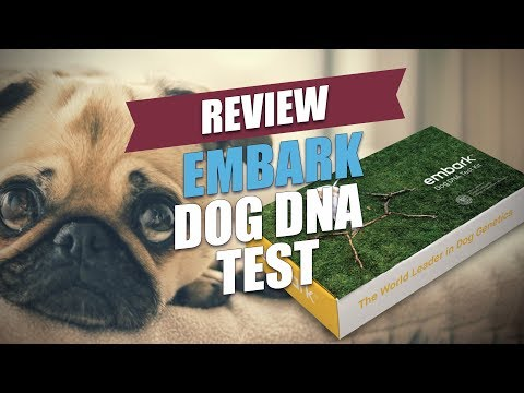Doggie DNA startup Embark raises $4.5 million in seed to find your puppy's breed