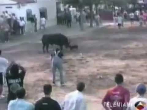 PERRO SALVA A SU DUEÑO DE ATAQUE DE TORO! (VERDADERO)