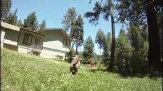 Nonton Extreme pitbulls Bossykennels com Film Subtitle Indonesia Streaming Movie Download