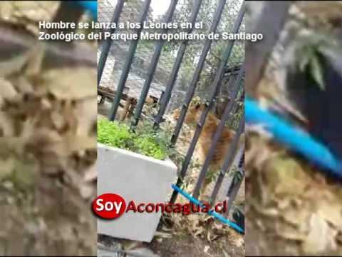這位想自殺的男子竟然「裸身跳進獅籠裡」,當兩隻獅子靠近他後…之後的展開扯爆了!