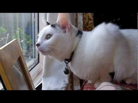 Kriza identiteta – onokad mačka pomisli da je ptica i počne da cvrkuće