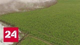 В Рязанской области не утихают лесные пожары