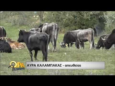 Η Κιβωτός της Ελλάδας! | 22/3/2019 | ΕΡΤ