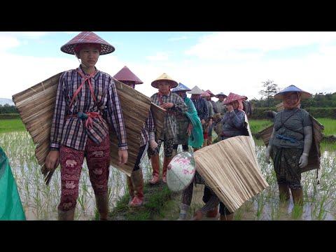 (Keng Tung farming time EP = 6) Happy time in rainy season in Keng Tung and Shan girls farming.