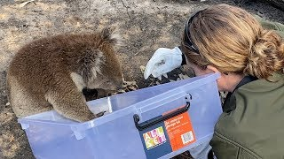 Australia fires: Helping animals in crisis by The Humane Society of the United States