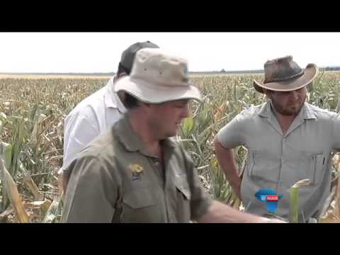 Droogte knou Vrystaat, Noordwes / Drought hits Free State, North West