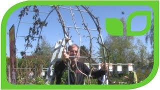 Der kurze Kiwi-Schnitt