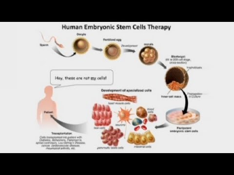 Genome vom Neandertaler und Denisova / Stammzellen von Menschen und Affen