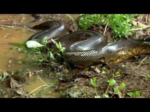 clip-sex-python