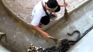 Уборщик у кобр