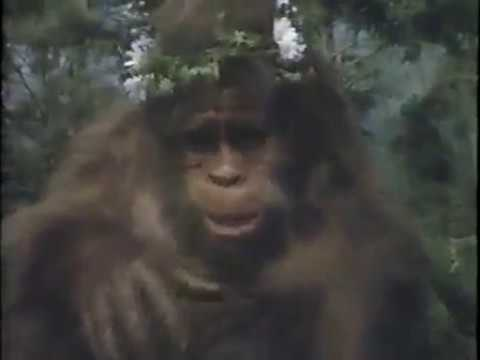 Harry And The Hendersons S01E14 Pet Physic