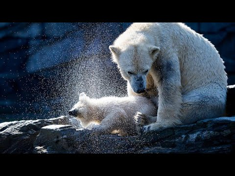 Berlin: Eisbärbaby Hertha erlebt im Tierpark ihren er ...