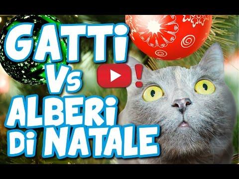 GATTI E ALBERI DI NATALE: chi vincerà? - VIDEOPAZZESCHI Tv