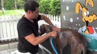 Video K9000 Dog Wash Demonstration Wash Video MP3, 3GP, MP4, WEBM, AVI, FLV Agustus 2018