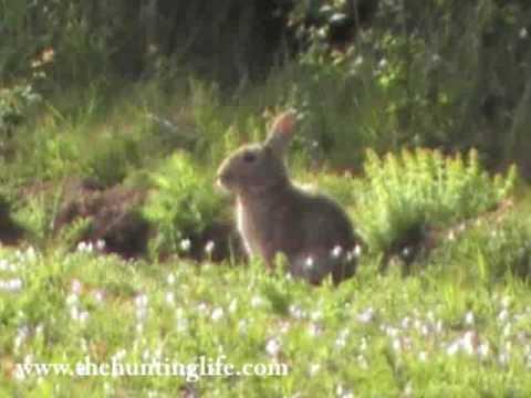 Rabbit Shot .22 Rimfire