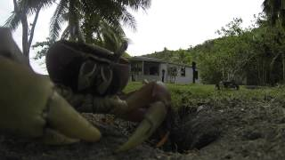 The Only Footage You Need to See Today is This Crab Stealing a GoPro Camera