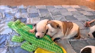 Ab pups!