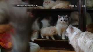 Video IMS - Sri Rahayu pelihara 40 ekor kucing di rumahnya MP3, 3GP, MP4, WEBM, AVI, FLV Februari 2018