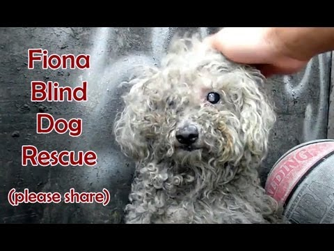 Blind dog rescue%3A Fiona - Please SHARE on FB %26 Twitter and help us raise awareness.  Thanks%21