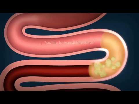 comment renforcer l'intestin