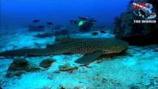 Phuket Scuba Diving Video - Underwater Thailand With Wreck Diving, Seahorses, Sharks