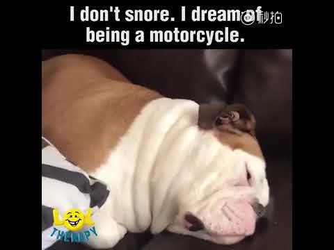 sleeping dog =)) - Thời lượng: 36 giây.