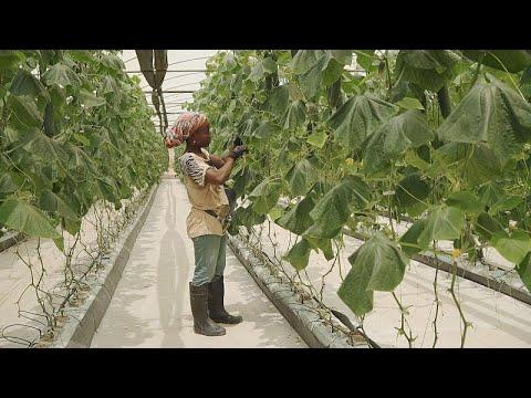 Angola: Chancen für Investoren in Landwirtschaft un ...