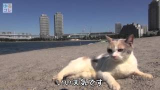【ゆるコレ】「あまちゃん」「ヨルタモリ」で大人気猫・ドロップが海辺でまったり
