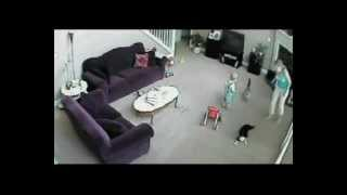 Video Cat defends baby from babysitter MP3, 3GP, MP4, WEBM, AVI, FLV Mei 2017