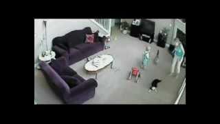 Video Cat defends baby from babysitter MP3, 3GP, MP4, WEBM, AVI, FLV Oktober 2017