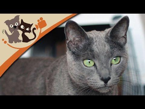 Katzen: Katzenhaltung und Pflege (Doku)