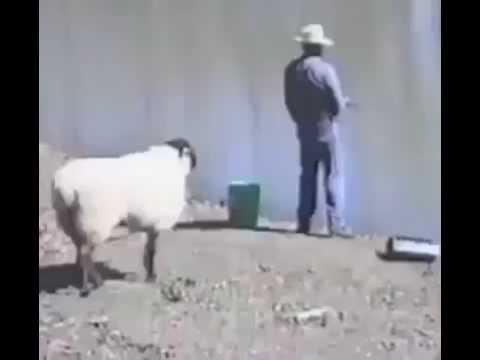 Comique video