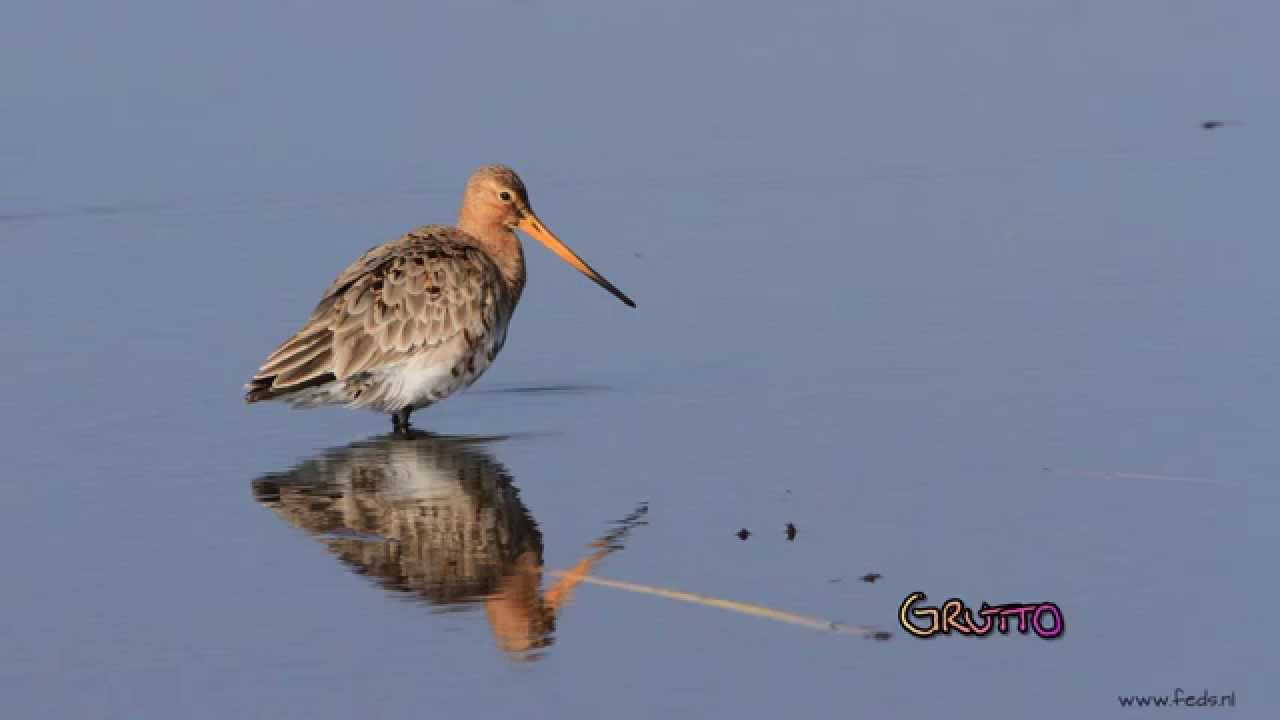 Birds foto slideshow