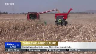 Zimbabwe's Agricultural Marketing Authority will issue $80 million in grain bills next week to buy maize from farmers. Grain bills...