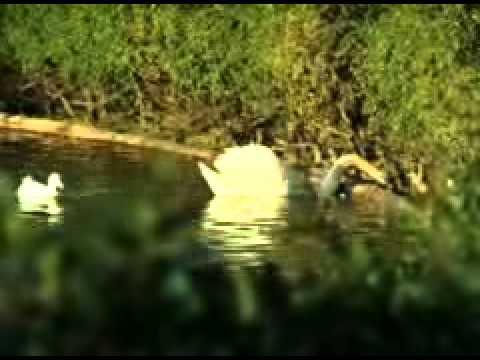 Parque de la Paloma - Estanque Video