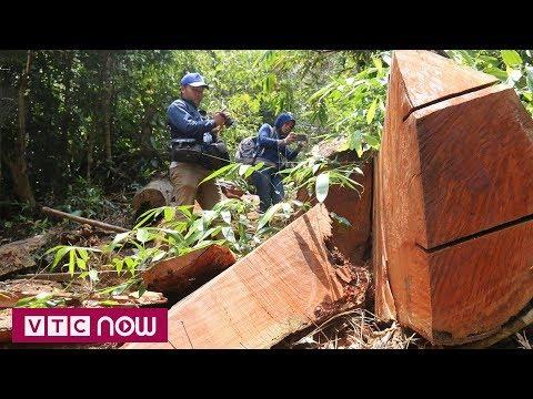 Chứng khoán Việt Nam đứng đầu thế giới sau 3 tháng | VTC1 - Thời lượng: 36 giây.