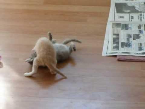 A Kitten Surprise!