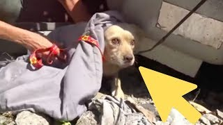 Terrified Dog Abandoned When His Family Moves Away Goes To Heartbreaking Lengths To Survive by Did You Know Animals?
