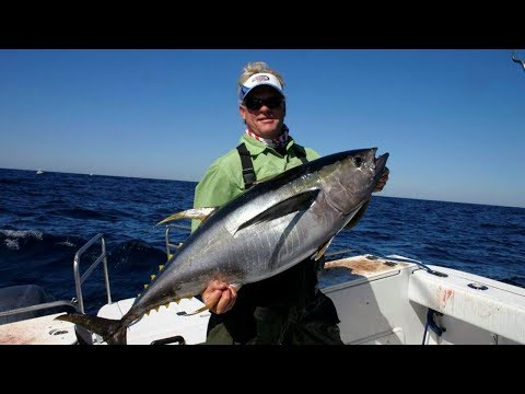 Relentless Fog - YELLOWFIN TUNA on DOA lures