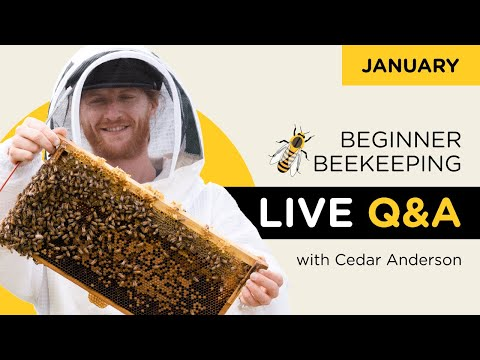 Beginner Beekeeping live Q&A with Cedar Anderson