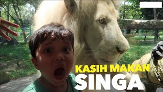 Video QAHTAN KASIH MAKAN SINGA | QAHTAN FEEDS LION MP3, 3GP, MP4, WEBM, AVI, FLV Maret 2018