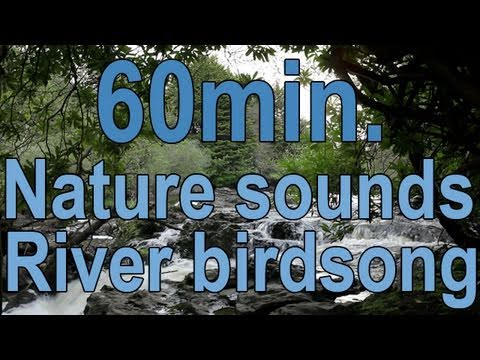 johnnielawson - 1 Hour of Relaxing Sounds of Nature, the Soothing Sound Bird Song and a Tranquil Waterfall. Use these Peaceful Sounds of Flowing Water and the Dawn Chorus fo...