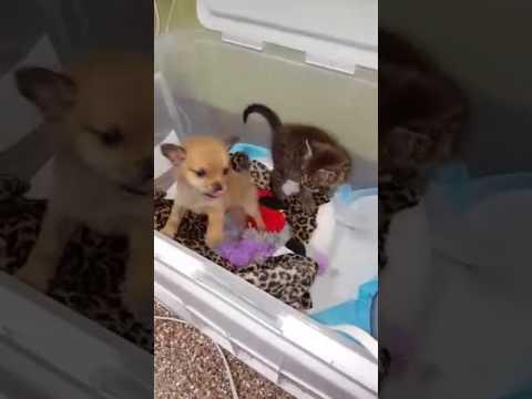 una-cucciola-e-un-gattino-si-incontrano-al-rifugio-e-si-salvano-la-vita-a-vicenda