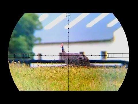Guinea Fowl Hunting at Spot X