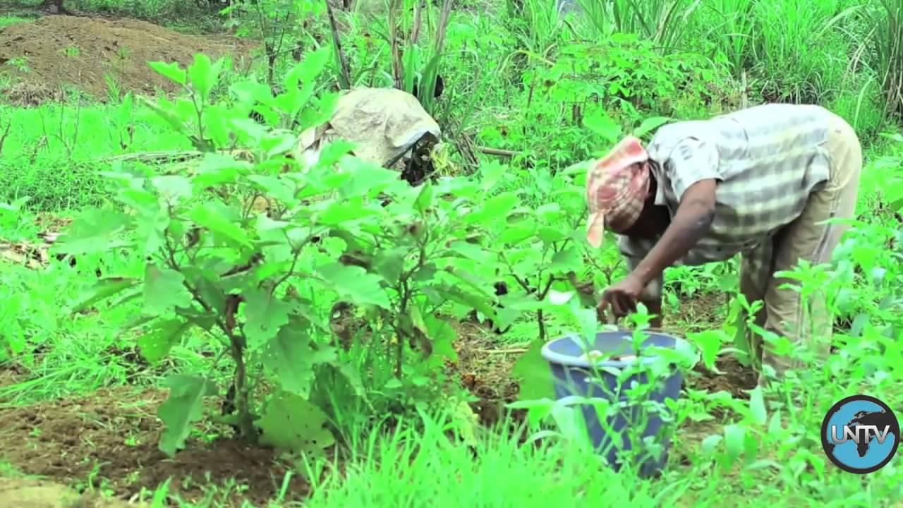 Республика Конго:  семена надежды