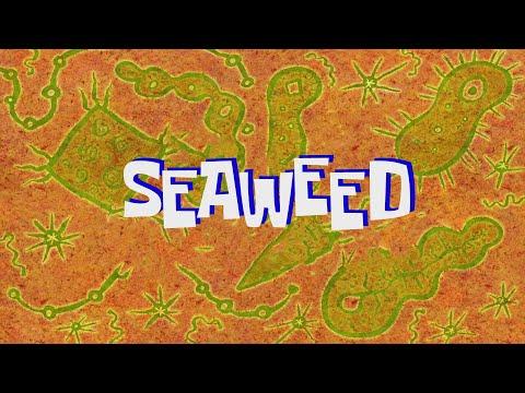 SpongeBob Music: Seaweed